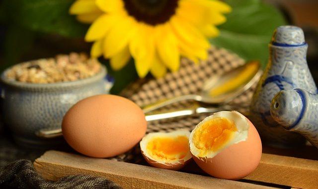 kuning telur sangat kaya akan protein