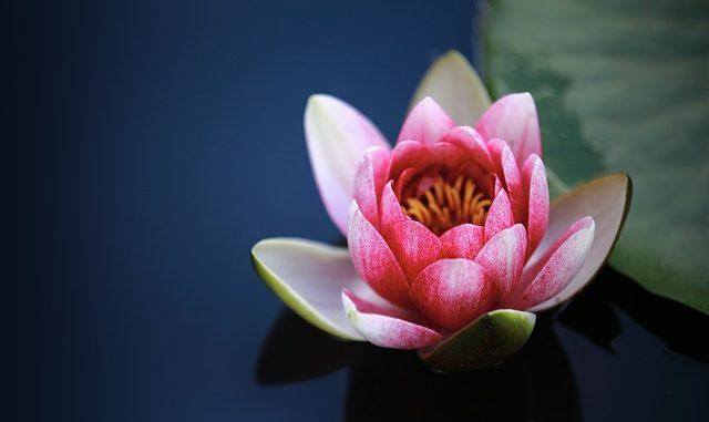 Bunga yang sedang bermekaran.