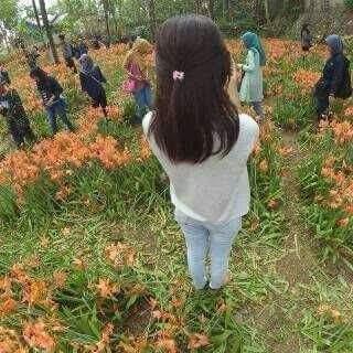 Pelaku Pengrusakan Bunga amaryllis di Gunungkidul Jogja2