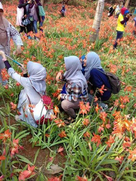 Pelaku Pengrusakan Bunga amaryllis di Gunungkidul Jogja3