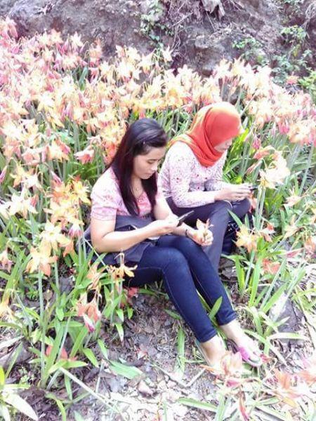 Pelaku Pengrusakan Bunga amaryllis di Gunungkidul Jogja4