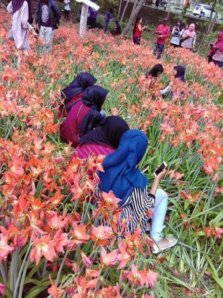 Pelaku Pengrusakan Bunga amaryllis di Gunungkidul Jogja7