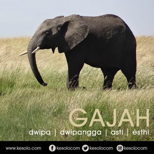 Dasanama atau nama lain jawa dari asti GAJAH